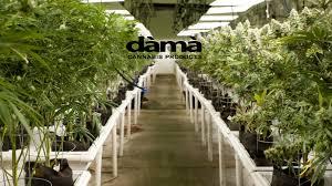Dama Farms